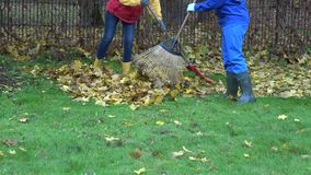 Young couple in colorful clothes rake autumn leaves in garden. 4K. Young couple in colorful clothes rake autumn leaves in garden. Family working together in stock video