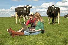 Young couple between the cows. Young couple with laptop between the cows in the countryside from the Netherlands Stock Images