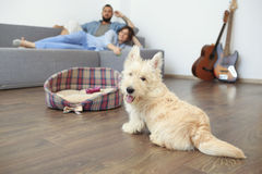 Young couple with a dog at home. Stock Images