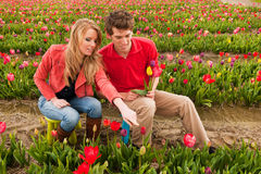Young couple in Dutch flower fields Royalty Free Stock Image