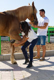 Young couple examining the hoofs of a female brown. Young couple checks the hoofs of a brown female horse at the stables of a horse riding club, preparing it for Stock Photo