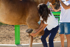 Young couple examining the hoofs of a female brown. Young couple checks the hoofs of a brown female horse at the stables of a horse riding club, preparing it for Royalty Free Stock Image