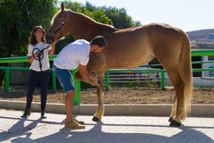Young couple examining the hoofs of a female brown. Young couple checks the hoofs of a brown female horse at the stables of a horse riding club, preparing it for Royalty Free Stock Images