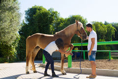 Young couple examining the hoofs of a female brown horse. Young couple checks the hoofs of a brown female horse at the stables of a horse riding club, preparing Royalty Free Stock Images