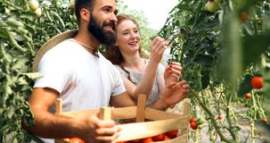 Young couple of farmers working in greenhouse. Young happy couple of farmers working in greenhouse Stock Photography