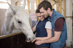 Young couple feeding beautiful white purebred horse Royalty Free Stock Photography