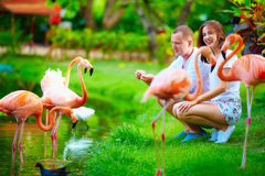 Young couple feeding flamingo birds with hands on pond Royalty Free Stock Photo
