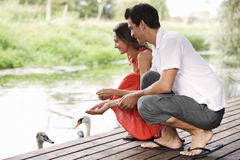 Young couple feeding swans Stock Images