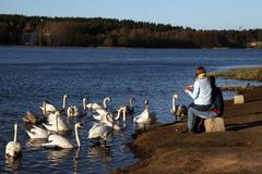 A young couple is feeding swans on the lake shore stock photography
