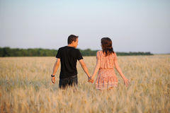 Young couple in the field. Young couple walking through the field Stock Photography