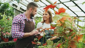 Young couple florists work in garden center. Attractive man and woman in apron count flowers using tablet computer. Young couple florists work in garden center Stock Images