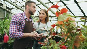 Young couple florists work in garden center. Attractive man and woman in apron count flowers using tablet computer. Young couple florists work in garden center Stock Photo