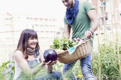 Young couple of gardeners collects fresh vegetables. In their city garden Stock Photo