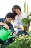 Young Couple Gardening Together Royalty Free Stock Photography