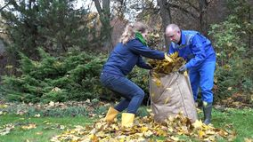 Young couple gather dry maple leaves in bag in autumn time. 4K. Young couple gather dry maple leaves in bag in autumn time. Seasonal work in garden. 4K stock video footage