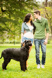 Young Couple With Giant Schnauzer Stock Photo