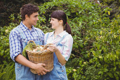 Young couple holding a basket of freshly harvested vegetables Royalty Free Stock Photo