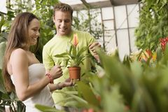 Young Couple Holding Flowerpot Royalty Free Stock Photography