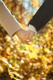 Young couple holding hands in the autumn forest Stock Image