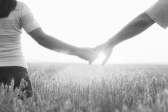 Young couple holding hands in sunny summer wheat field Stock Images