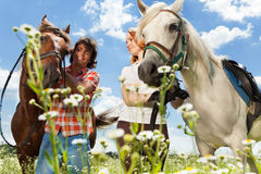 Young couple with horses looking at each other Stock Photography