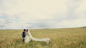 Young couple, just married in love stading in a wheat field. Looking at each other. stock video