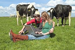 Young couple with laptop between the cows Royalty Free Stock Image