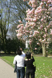 Young couple magnolia. Young couple taking pictures of a blooming magnolia tree with their mobile phones stock photos
