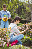 Young couple maintaining plants in garden Stock Images