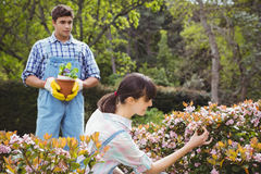 Young couple maintaining plants in garden Stock Image