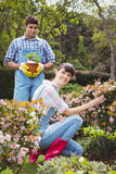 Young couple maintaining plants in garden Royalty Free Stock Photos