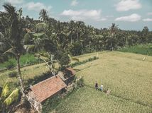 Young couple of man and woman on a rice field, Bali vacation concept. Indonesia. Young couple of men and women on a rice field, Bali vacation concept royalty free stock photography