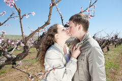 Young couple outdoors. Attractive couple kissing in garden among the blossoming peach trees Stock Images