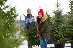Couple buying Christmas tree Royalty Free Stock Photography