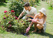 Young couple planting flowers in the garden. And smiling Stock Photo