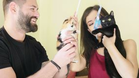 Young couple playing with their two cats in the living room. Animal lovers stock video footage