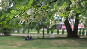 Young couple relaxing in the city park. Unrecognizable, blurred, out of focus young couple meets under the tree in the city park stock video footage