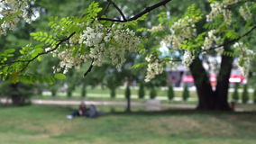 Young couple relaxing in the city park. Unrecognizable, blurred, out of focus young couple resting under the tree in the city park stock video