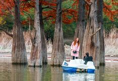 Young couple sailing on paddle boat and taking photos by wood of red swamp cypresses growing in Sukko lake by Anapa, Russia. Water royalty free stock photo