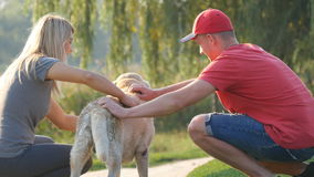 Young couple spend time outdoors with their pet dog. Happy man and woman affectionately stroking labrador or golden stock video footage