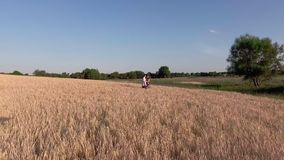 Young Couple standing in Wheat Field stock footage