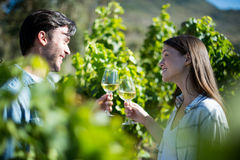 Young couple toasting wineglasses at vineyard on sunny day Stock Images