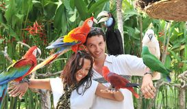 Young couple with tropical birds. On bali island Indonesia Stock Photography