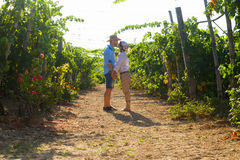 Young couple, vine growers, in the vineyard. Royalty Free Stock Photo