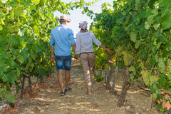Young couple, vine growers, in the vineyard. Stock Photo
