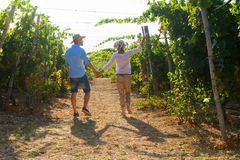 Young couple, vine growers, in the vineyard. Royalty Free Stock Photography