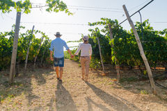 Young couple, vine growers, walking in the vineyard. Stock Photo