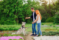 A young couple walking a dog in the park Stock Photography