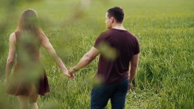 Young couple walking in an oat field. They hold hands, womans hair sway in the air as she turns head. Backview, slow mo. Backview of a young couple walking in an stock footage