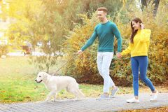 Young couple walking their dog. In park royalty free stock photo
